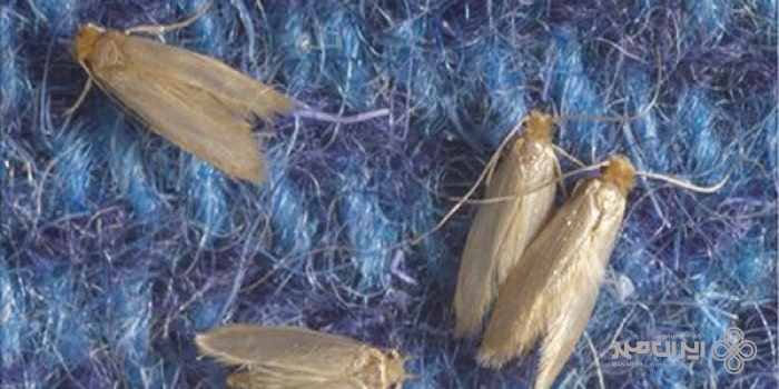 بیدخوردگی فرش